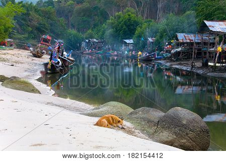 Patong Thailand February 2 2017: A red dog lies on the sand in the background of a Thai fishermen's settlement.