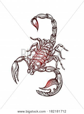 Scorpion tattoo - ornate exquisite scorpion image, sign horoscope