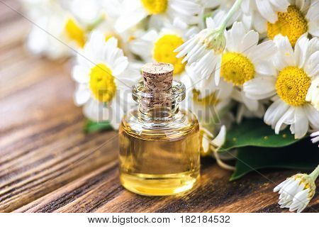 Essential oil in glass bottle with fresh chamomile flowers, beauty treatment. Spa concept. Selective focus. Fragrant oil of chamomile flowers, macro on wooden table horizontal.