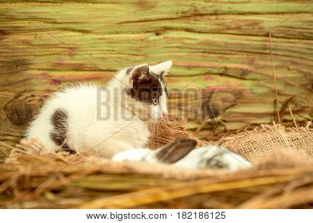 Cute Small Cat And Blurred Little Rabbit Sitting On Sackcloth