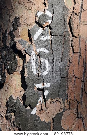Bark of a tree in a forrest in close-up