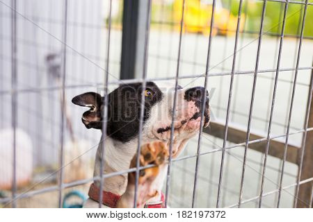 Close up of dog bulldog in a cage