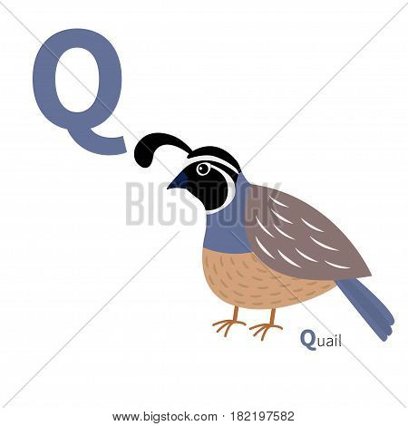 ABC english alphabet. Letter Q. Quail bird. Cute cartoon character. Flat design. Isolated. White background. Vector illustration