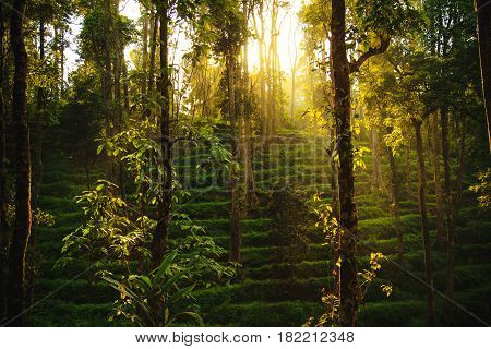 Stunning wild jungle in the highlands Kerala state South India.