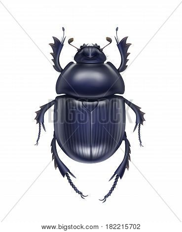 Vector dark blue shiny dung beetle Scarabaeus Sacer close up top view isolated on white background