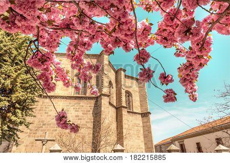 A view over capilla de Mosen Rubi, a historic building in Avila, Spain, seen through the branches of a blooming tree