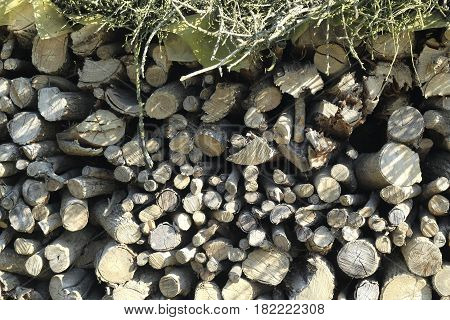 a close up on logs of firewood