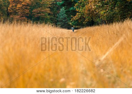 Tourist Standing On Path In Tall Grass Photographing Nature.