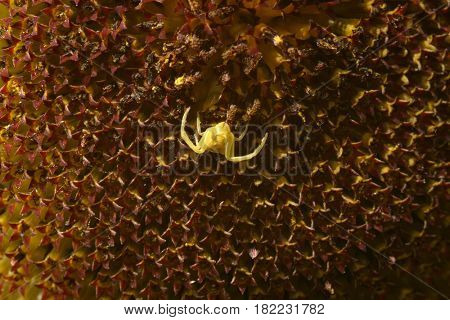 spider on web, nature photo