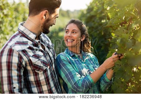Young couple working in vineyard before harvesting