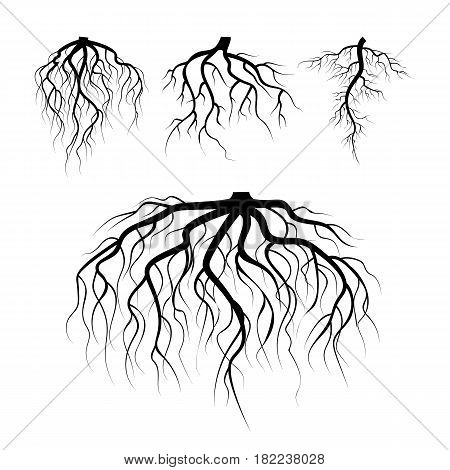 Tree Underground Roots Vector Set. Illustration Isolated