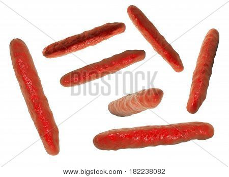 Rod-shaped highly-detaled bacteria isolated on white background, 3D illustration