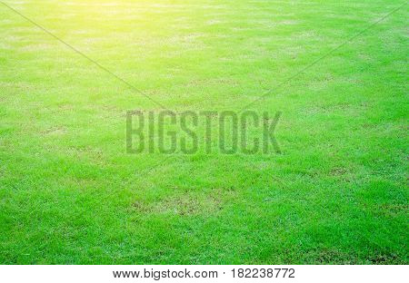 The morning sun shines on the green lawn, the backyard for the background, the meadow grass.