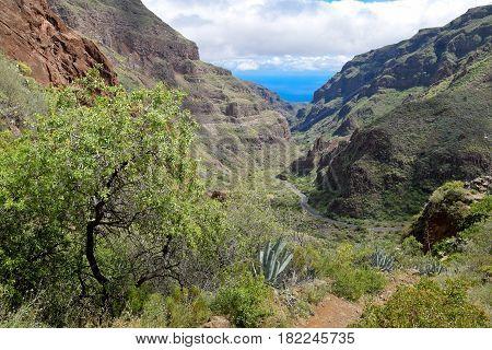 Landscape in Barranco de Guayadeque Gran Canaria
