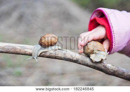 Childs hand sits on the branch a large snail, where another snail is already sitting