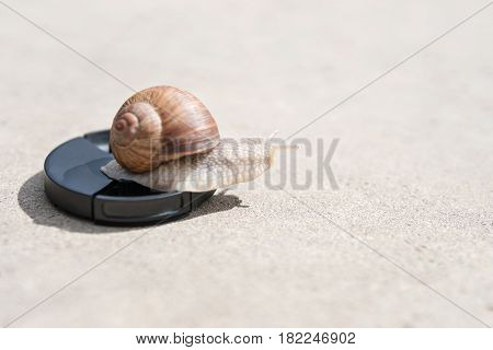 Large snail crawls on the lens cover of the camera lying on the asphalt