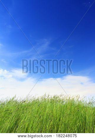 green grass under blue sky background