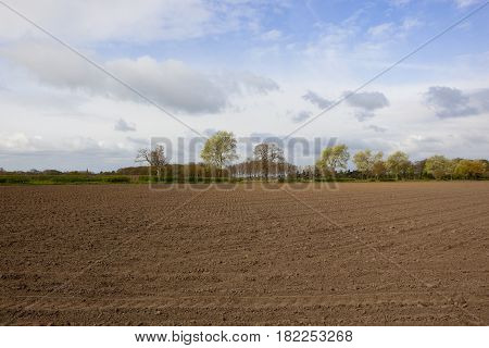 Springtime Trees And Cultivated Field