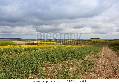 Scenic Oilseed Rape Crops