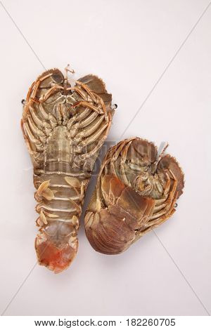 slipper lobster on the white background