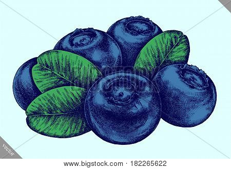 Engrave blueberry hand drawn graphic vector illustration art