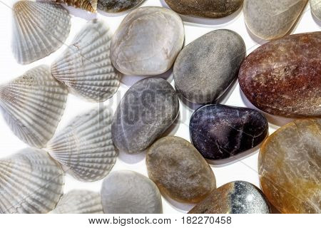 Beach combing find of pebbles and shells arranged in a layer and studio shot against a white background. Nice background nature environment image.