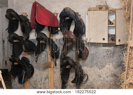 Group of horse saddles hunging on wall in stable.