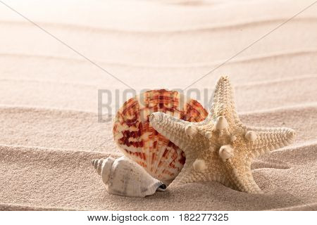 seashells and starfish on beach sand. Summer holiday texture background.