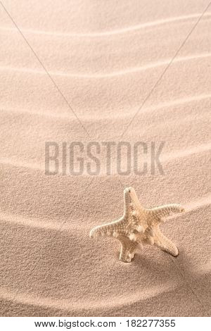 tropical seastar standing in seand on a paradise beach. Summer holiday vacation background.