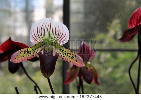 Horizontal image of exotic orchids in tropical garden