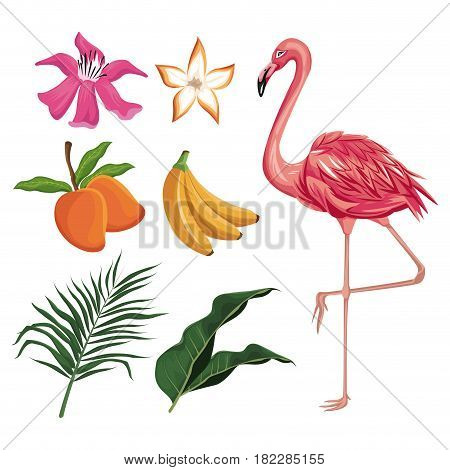flamingo mango banana flower leaves nature tropical vector illustration eps 10