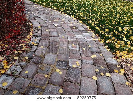 A textured red and grey brick pathway winds around a bush and grass covered in multi- colored fall leaves in a city park on a fall day.
