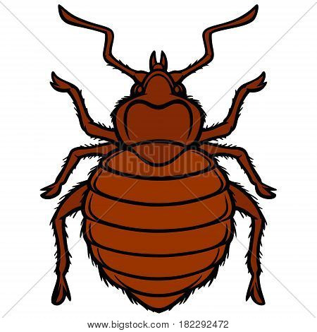 A vector illustration of a Bed Bug.