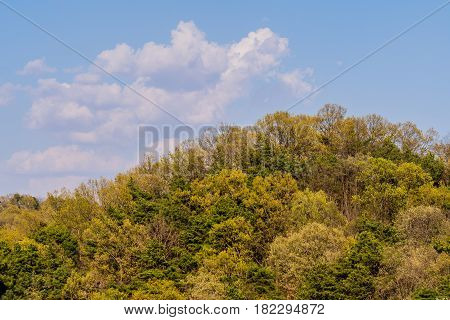 Landscape of puffy white clouds over lush green forest on mountainside in South Korea.