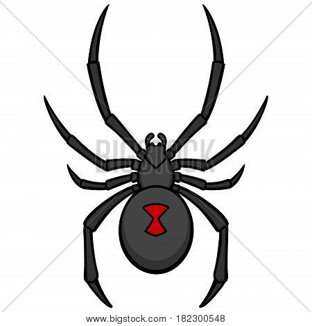 A vector illustration of a Black Widow Spider.