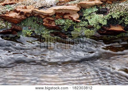 Log covered in moss, lichen, and fungus at the streams side.