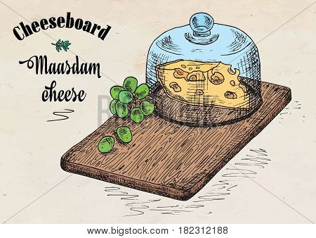 hand drawing illustration of chopping board with grapes and cheese. Maasdam cheese board.