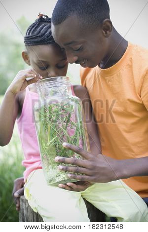 African brother and sister peering into insect jar
