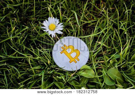 Silver Bitcoin With White Flower On The Grass