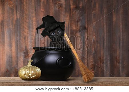 Cute Kitten Dressed as a Halloween Witch With Hat and Broom in Cauldron