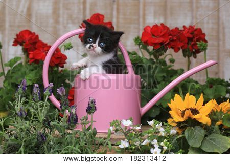 Adorable 3 week old Baby Kitten in a Garden Setting