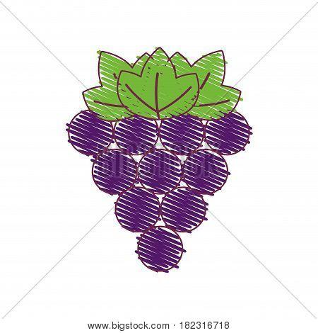 purple grapes fruit icon image, vector illustration design stock