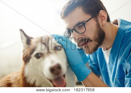 Professional vet clinician checking up his patient