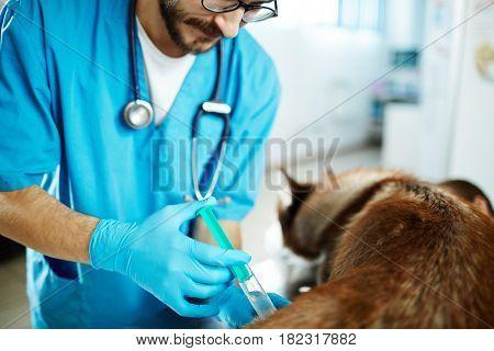 Doctor healing sick dog in vet clinic