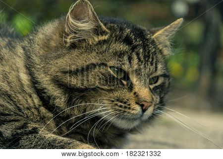 The thoughtfulness of an unmarried cat in the street on a blurred background