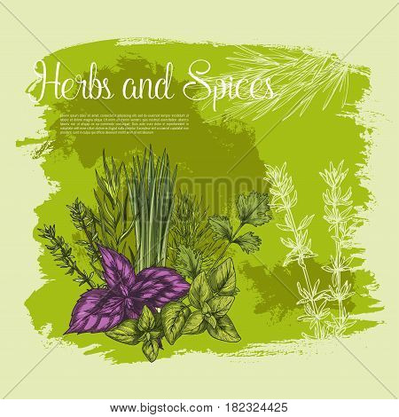 Herbs and spices vector poster. Sketch basil or oregano leaf salad condiment, onion leek and spicy rosemary dressing, aroma peppermint or lavender grass and tarragon for gourmet culinary design