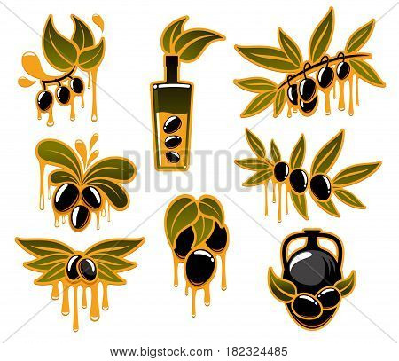 Olive oil and olives vector isolated icons set. Dripping drops of oil from black and green olive branches. Design for extra virgin oil product package or Italian and Mediterranean cuisine