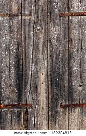 Ancient wooden doors. Texture of a scratched tree.