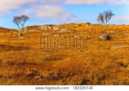 Norway landscape with lonely trees background blue sky.