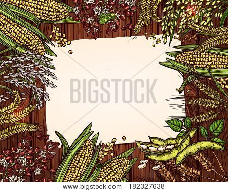 Cereals and grain blank page for recipe note vector template. Frame design of wheat and rye ears, buckwheat seeds and oat or barley millet, agriculture harvest of corn cob and farm rice sheaf